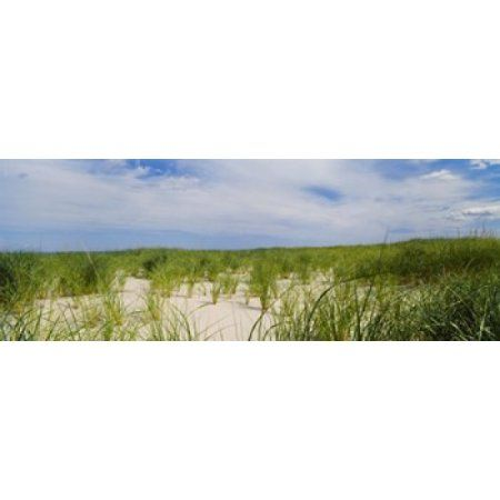 Sand dunes at Crane Beach Ipswich Essex County Massachusetts USA Canvas Art - Panoramic Images (18 x 7)