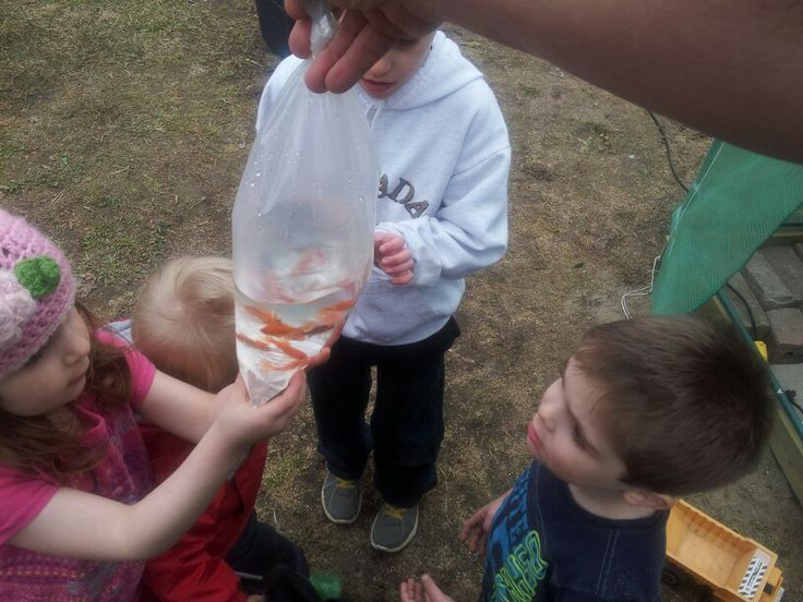 Kids love the fish