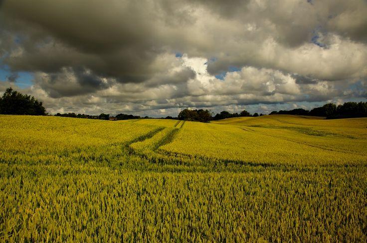 summer field by Henrik Palshøj on 500px