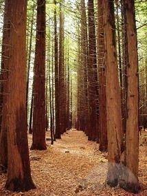 Whakarewarewa (Redwoods) Park, Rotoroa