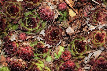 flower, leaf, rose - flower, backgrounds, nature