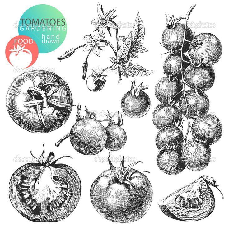 Yükle - Domates — Stok İllüstrasyon #12455130