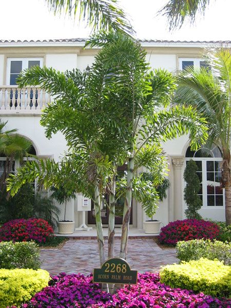 17 Best Images About Palm Landscaping On Pinterest