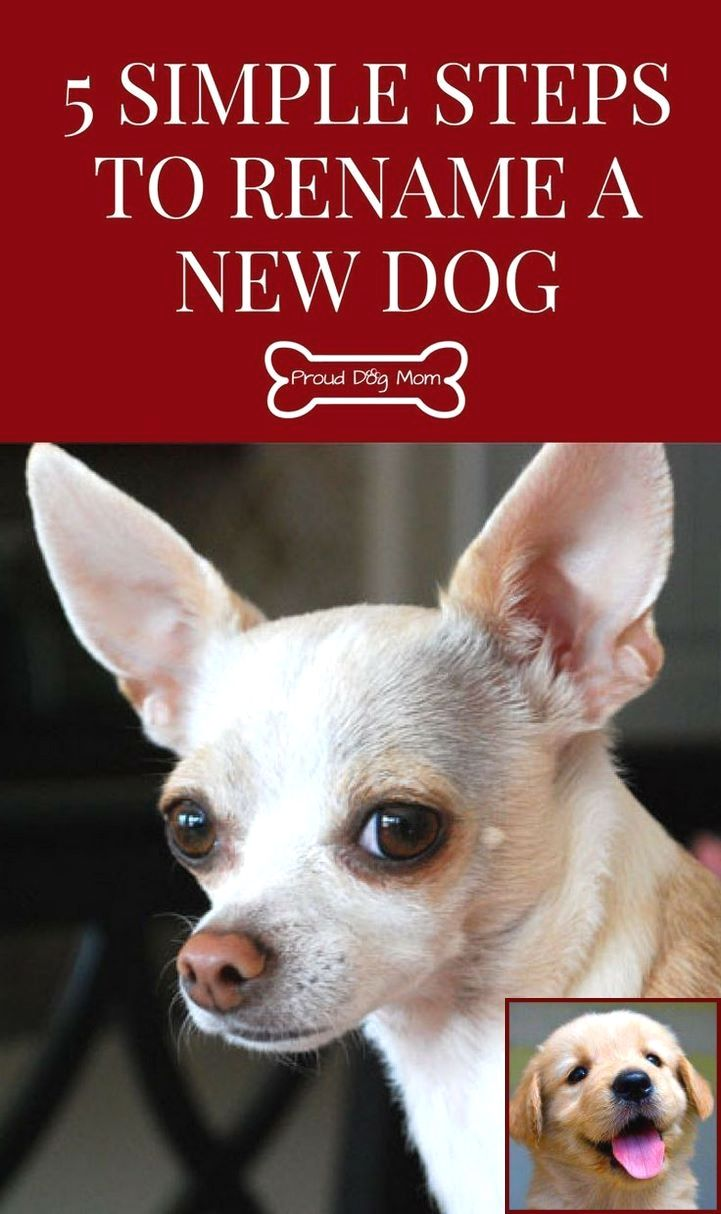 Dog Behavior With New Puppy And Dog Behavior Articles Dog