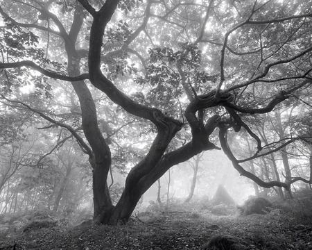 """misty morning"" from nature on desktopnexus"