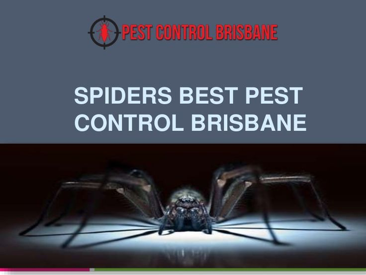 The presence of one or two spiders in our homes becomes even beneficial because they are responsible for exterminating insects much smaller and more annoying.  http://www.slideshare.net/JesiKa3/spiders-best-pest-control-brisbane