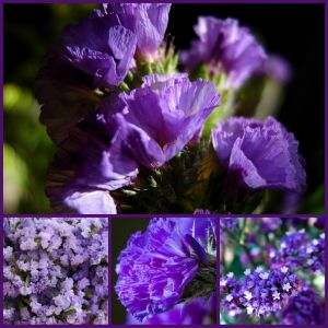 This is a thumbnail. To see the full image, please visit http://partymotif.com  Purple Flowers | Types of Purple Flowers | Names of Purple Flowers | Purple Flower Centerpieces | Purple Flower Arrangements | Purple Bouquets | Purple Centerpieces | Purple Roses | Purple Carnations | Purple Daisy | Purple Lotus | Purple Dahlia | Purple Wedding | Wedding Bouquets | Wedding Flowers