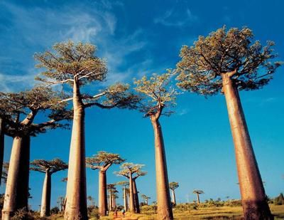 Tsingy and Baobab Tour - Rate: From US$2,408.00 US $ per person for 9 Nights