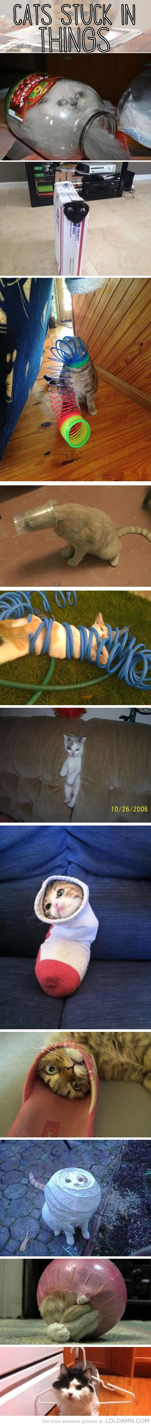 Funny cats: Cats stuck in things