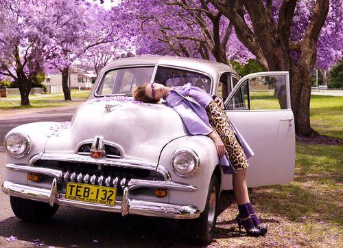 lovely lavender of Jacaranda trees with old Holden car - Australia
