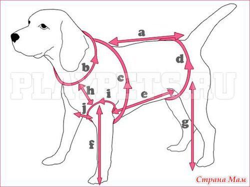 Como fazer medições em cães