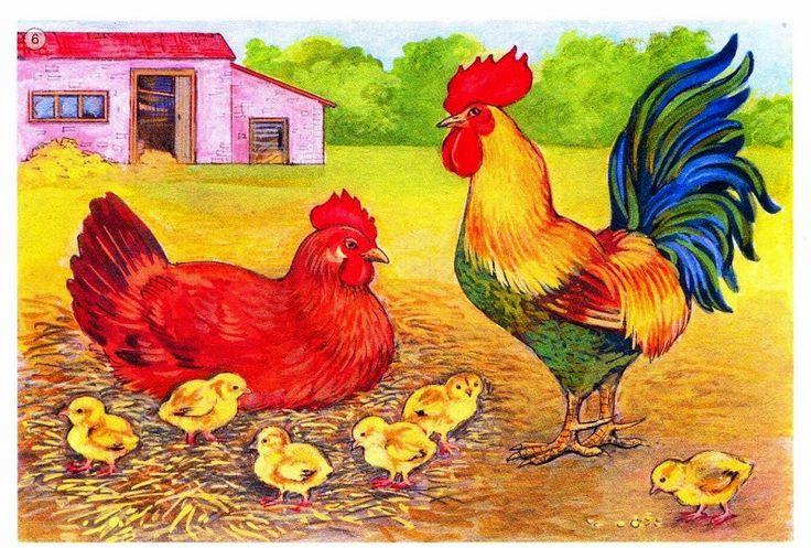 Gall, gallina i pollets.