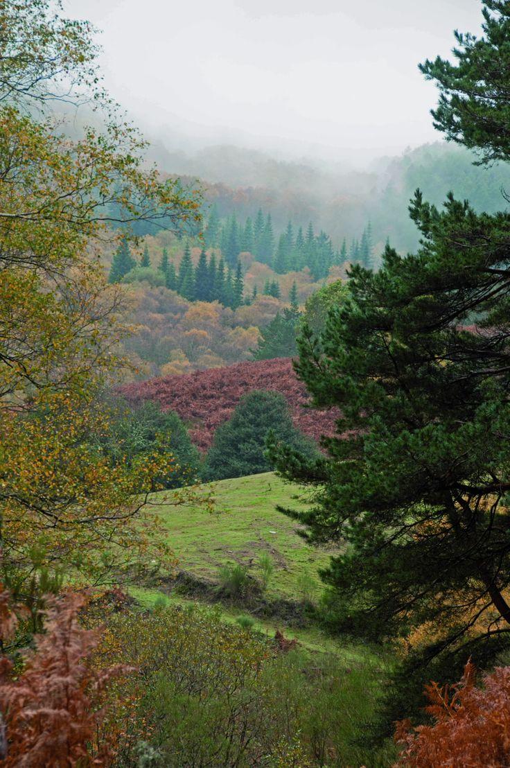 Image result for monte aloia nature park spain