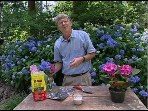 Change Colour Hydrangea Plant Easy Video Tutorial | The WHOot