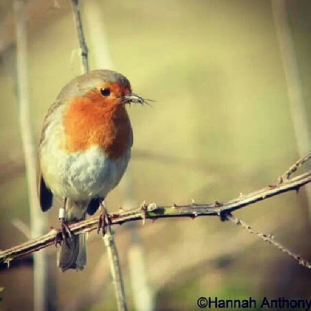 One of my favourite birds..