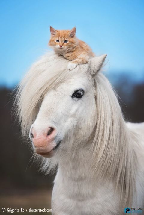 Adorable friendship, horse and kitten on his head.