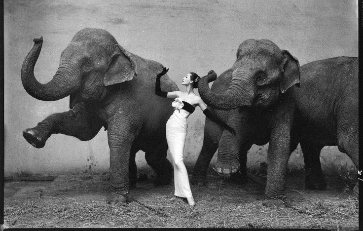 Dovima with elephants, evening dress by Dior, Cirque d'Hiver, August 1955