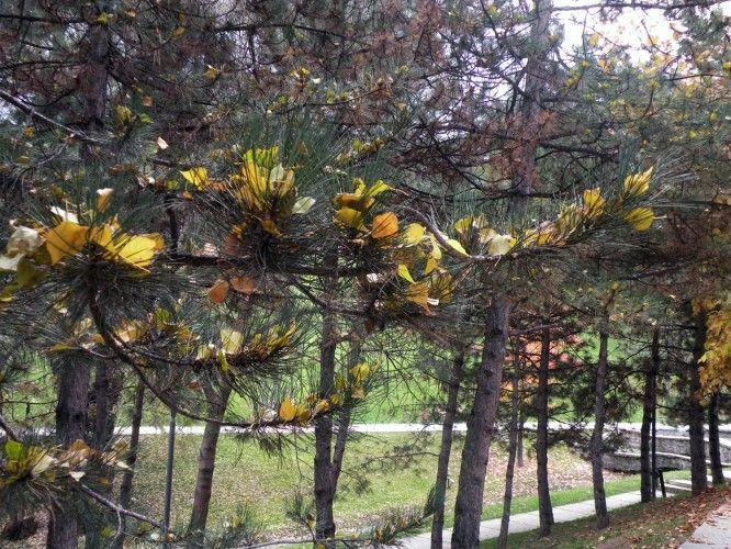 Seymenler Parkı'nda Bir Sonbahar
