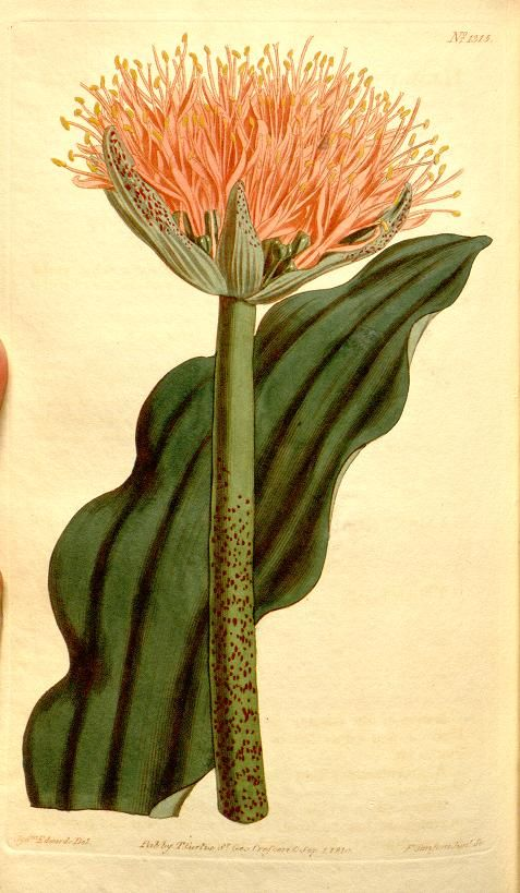 Best 1237 Wiccan Images On Pinterest: Best 25+ Botanical Drawings Ideas On Pinterest