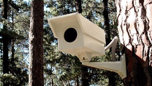 Porky Hefer Design, the South African firm with the inventive name, introduces a security camera-shaped birdhouse designed to keep non-winged trespassers at bay.
