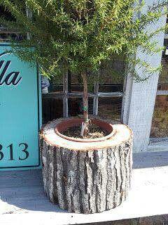 Tree stump- @Alicia T T Benefield