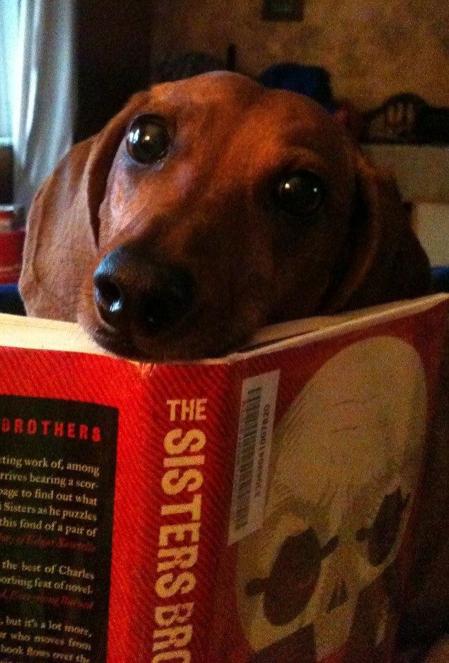 Anyone read a good book lately? - photo via I love Dachshunds on fb