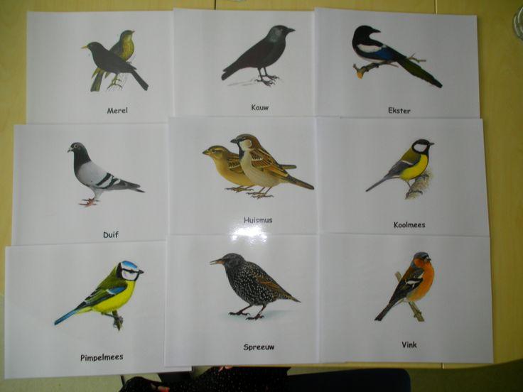 Vogels in de winter (prenten A4 + benaming vogels) *liestr*