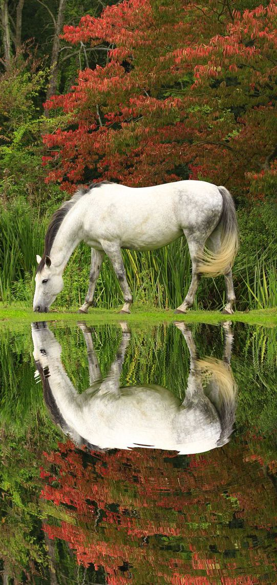A Beautiful Lone Wild White Buckskin Mustang Peacefully Grazing on a Quiet Fall Day Near a Small Pool of Water.
