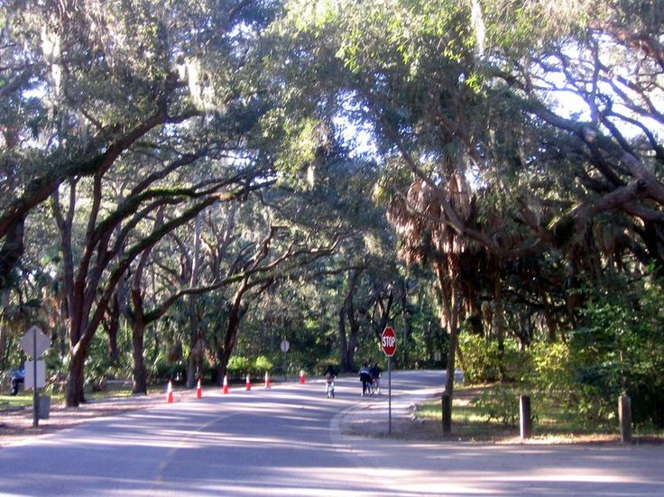 Beautiful Philippe Park in Safety Harbor, Florida where I once lived. This is right along Tampa Bay where I walked my dogs.