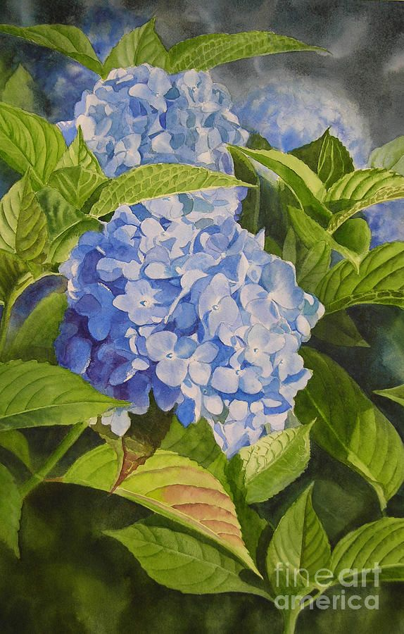 Blue Hydrangea Painting by Sharon Freeman - Blue Hydrangea Fine Art Prints and Posters for Sale