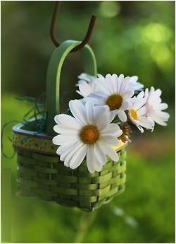 ♥ Adorable little Easter basket with daisies tucked in.