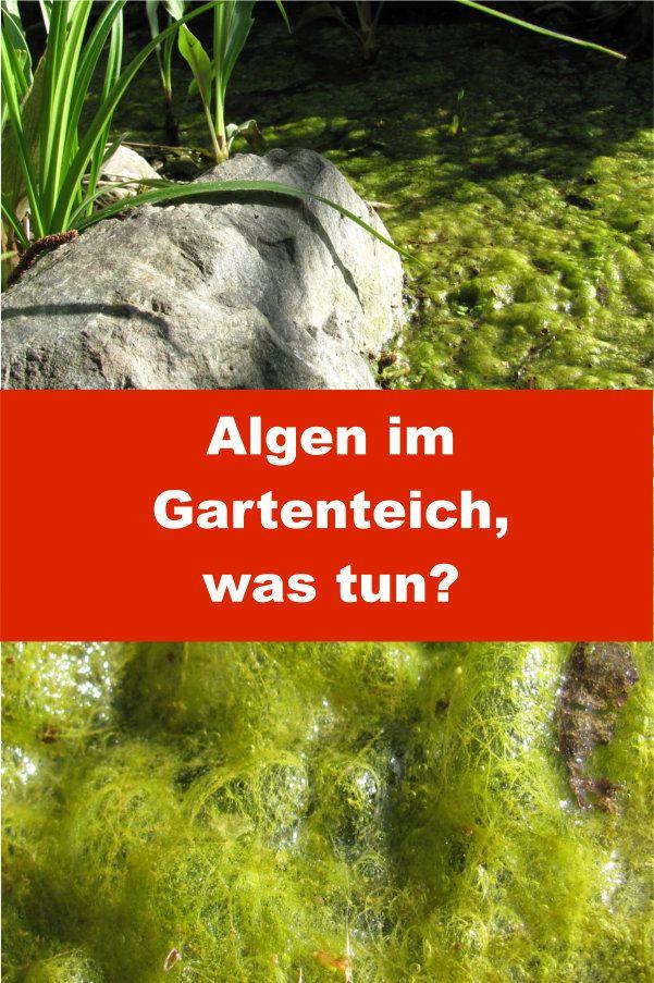 Algen Im Gartenteich Gartenbob De Der Garten Ratgeber Gartenteich Algen Im Teich Teich