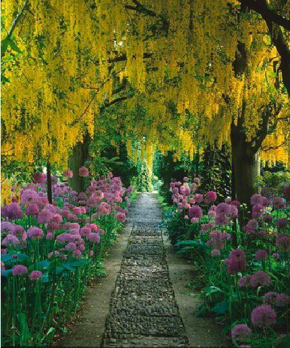 Laburnum arch, Barnsley House, Rosemary Verey, I have admired this garden since Jenny Green gave me the book 10 years ago.