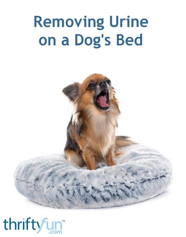 Removing Urine On A Dog S Bed Removing Dog Urine Smell Dog Urine Cat Spray