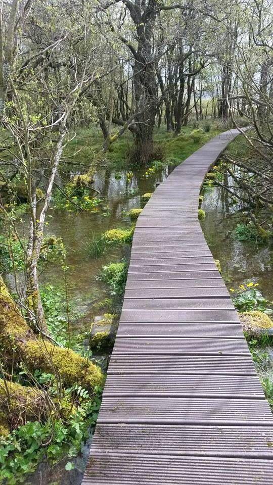 Great walkway over the marsh at Malham Tarn! Beautiful.