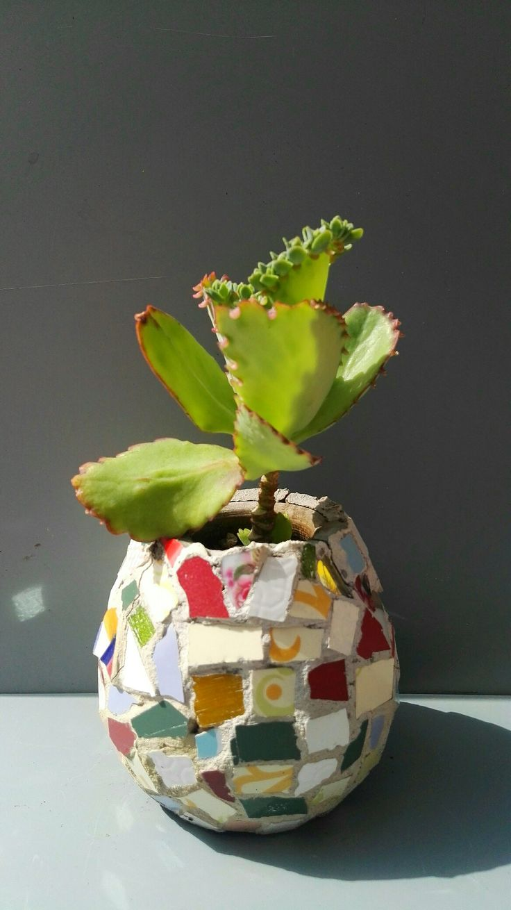 Mosaic Flower pot and calanchoe by Ricardo Stefani