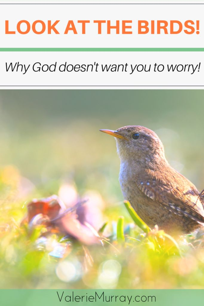 Look At The Birds! Why God Doesn't Want You To Worry About Your Life!