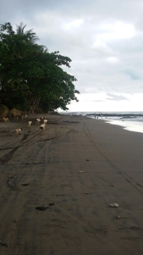 Pantai dora