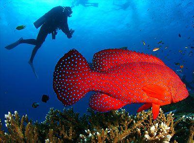 Scuba diving in Krabi, Thailand