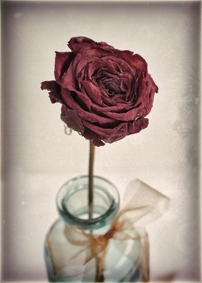 A rose from my love - By Alycia Rowe