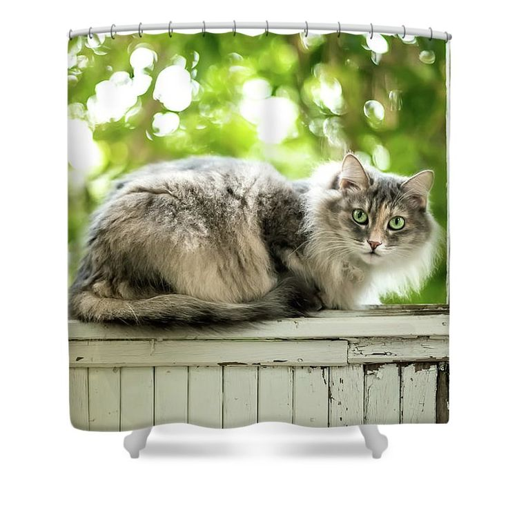 Adorable Shower Curtain featuring the photograph Gray Cat Sitting On A Balcony by Oksana Ariskina on @pixels and @fineartamerica. Gray fur kitten relaxing on a vintage rusty balcony wondow with sunny bokeh background.  Buy print and other product with my fine art photography online: www.oksana-ariskina.pixels.com #OksanaAriskina