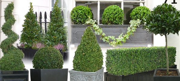 Hanging Flower Baskets Canadian Tire : Best ideas about topiary plants on