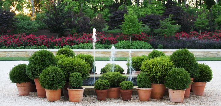 Containers with Boxwood surrounding fountain - AJF Design