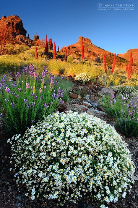 Atardecer en primavera en el Teide, Tenerife. Islas Canarias Spain  by Saul Santos Diaz