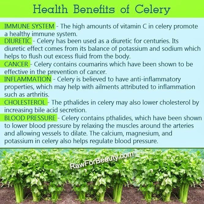 Celery was one of those veggies I never paid much attention to. Boy was I wrong!! Take a look at the amazing benefits of Celery... http://healthandwellnessdigest.com/benefits-of-celery/