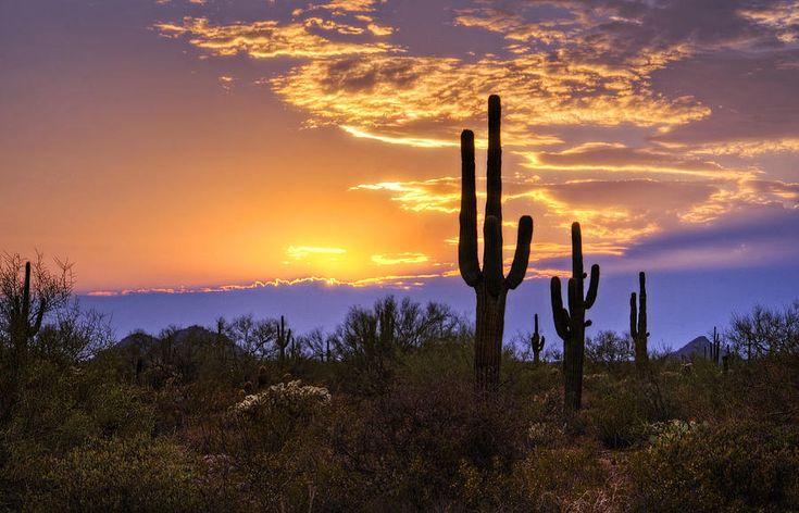 Southwest Desert Sunset Photograph  - Southwest Desert Sunset Fine Art Print