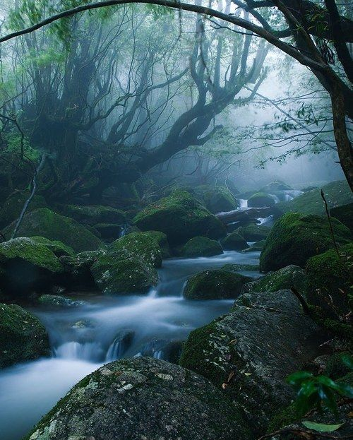 mononoke forest, yakushima island, japan along the kusugawa trail