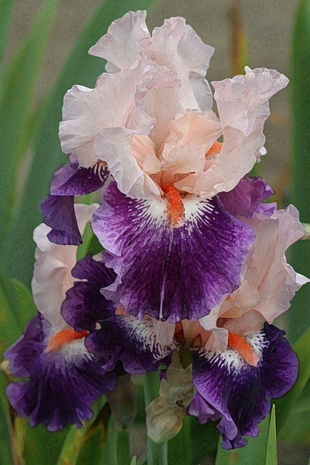 Irises,M It was nice spending some time today at the gym. We need to do it more often because it is good for us.