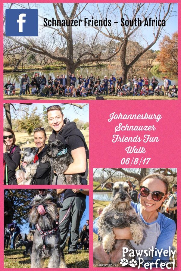 Big high five to everyone who attended the JOHANNESBURG Schnauzer Friends -August 2017 Sunday Morning Walk at the Delta Park. What a stunning morning. A bit chilly but that never scares hardcore schnauzie lovers! If you see your schnauzie please comment with their name so that we can get to know you and your pooch! Thanks to Deborah - Schnauzer Mom to Max, Rosa and Thomas for hosting the walk! Thank you to schnauzer dad Chris Kritzinger (Kritzography) for these awesome pictures!