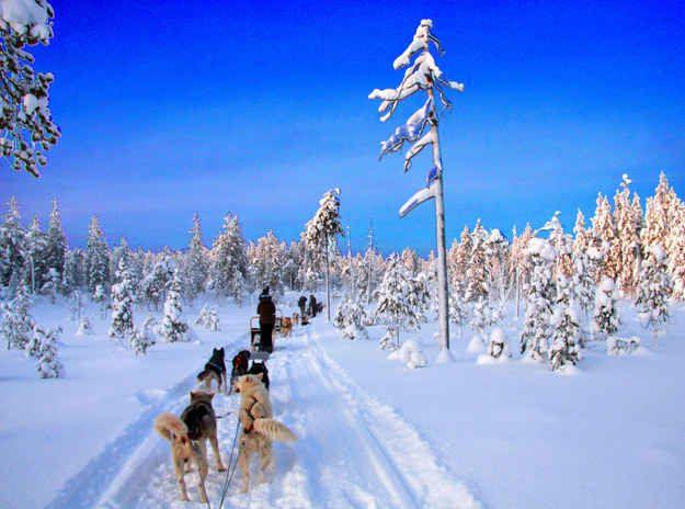 Faire du traîneau en Laponie.